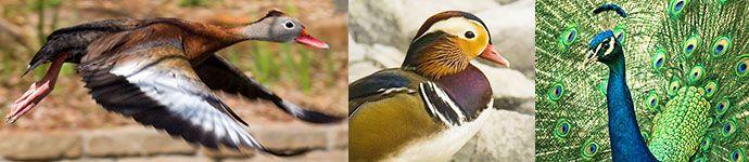 Birds of Clark Gardens