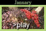 January at Clark Gardens