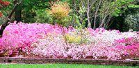 Flowers of Clark Gardens